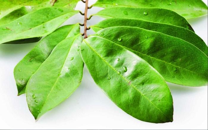 Soursop (Annona muricata Linn) may be a shut relative with srikaya