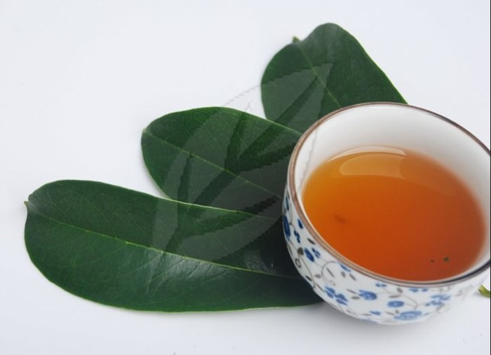 Soursop leaves will cure cancer part 1